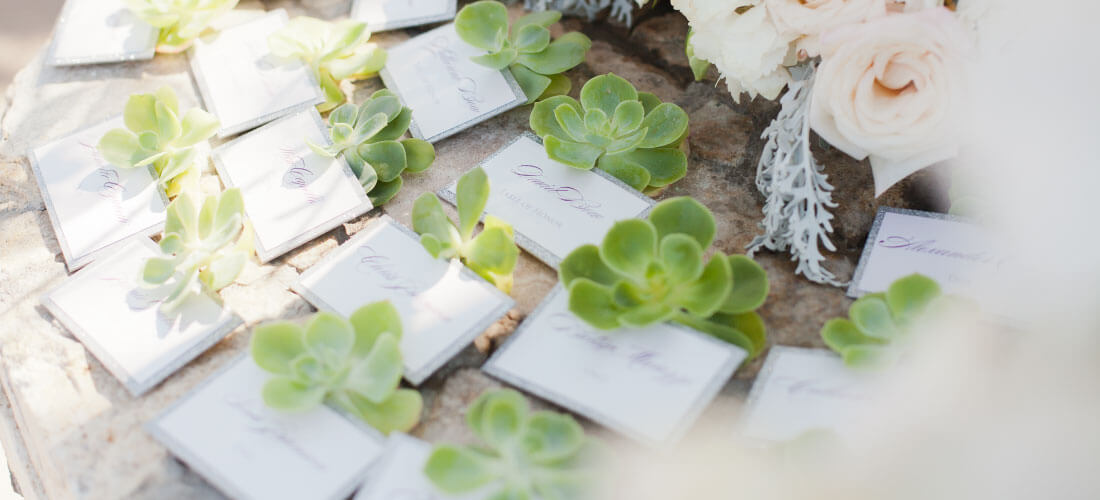 Green succulents with white and silver name cards for Cabo Wedding Services