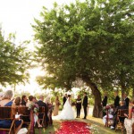 Flora Farms Mango Grove Wedding