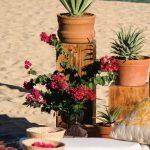 agave-ceremony-decor