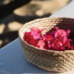 bougainvillea-toss-petals