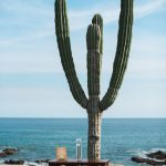 Cactus wedding ceremony