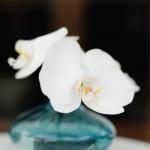 orchid-cocktail-centerpiece